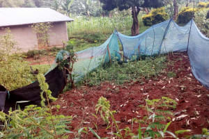 The Water Project: Koitabut Community, Henry Kichwen Spring -  Mosquito Nets Used For Wrong Purposes