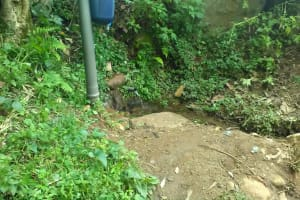 The Water Project: Shitoto Community, Mashirobe Spring -  A Chlorine Dispenser At The Spring