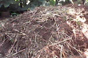 The Water Project: Upper Visiru Community, Wambosani Spring -  Animal Waste Dumpsite In The Community