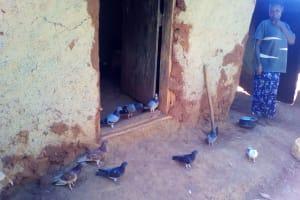 The Water Project: Upper Visiru Community, Wambosani Spring -  Birds