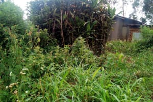 The Water Project: Elutali Community, Obati Spring -  A Bathroom Made From Growing Bushes