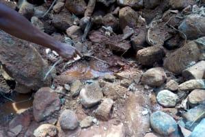The Water Project: Shilakaya Community, Shanamwevo Spring -  A Crab Living At The Spring