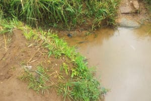 The Water Project: Emulakha Community, Alukoye Spring -  Alukoye Unprotected Water Source