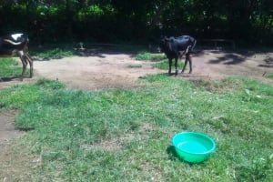 The Water Project:  Cows Grazing At An Open Field