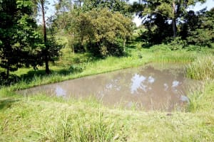 The Water Project: Irumbi Community, Okang'a Spring -  A Fishpond Using Water From Okanga Spring