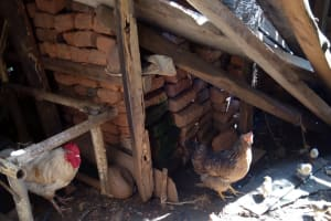 The Water Project: Irumbi Community, Okang'a Spring -  Chicken At A Community Members Backyard