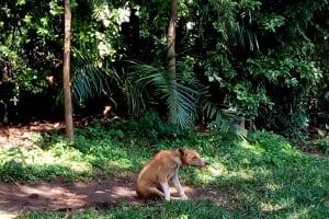 The Water Project: Irumbi Community, Okang'a Spring -  Dog