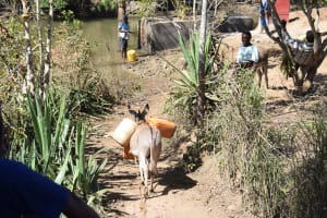 The Water Project: Ilinge Community D -  Donkey Carrying Water