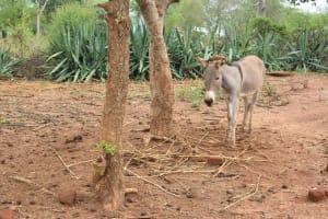 The Water Project: Ikuusya Community A -  Donkey