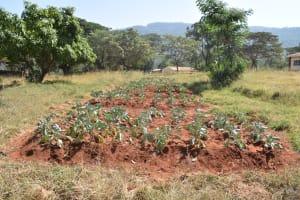 The Water Project: Ndoo Secondary School -  School Garden