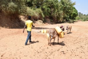 The Water Project: AIC Mbau Secondary School -  Using Donkey To Bring Back Water