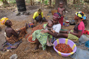 The Water Project: Mathem Community -  Sorting Palm Fruit
