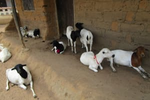 The Water Project: Mabendo Community, Mosque -  Animal And Their House