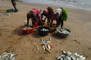 The Water Project: Pewullay Church of God Primary School -  Sorting Fish