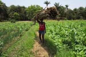 The Water Project: Moniya Community -  Carrying Wood