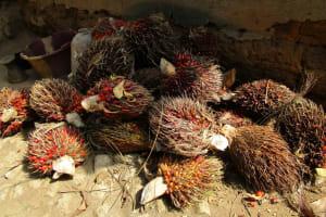 The Water Project: Moniya Community -  Palm Fruit