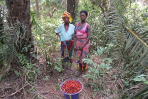 The Water Project: Moniya Community -  Sorted Palm Fruit