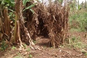 The Water Project: Kyamudikya Community -  Improvized Latrine With Banana Leaves