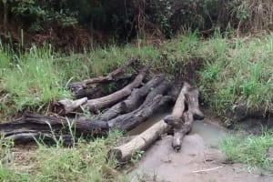 The Water Project: Alimugonza Community A -  Open Water Source
