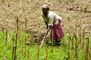 The Water Project: Bukhanga Community, Indangasi Spring -  Working On The Farm