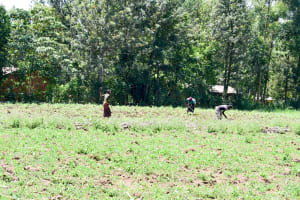 The Water Project: Mungakha Community, Nyanje Spring -  Working On A Farm