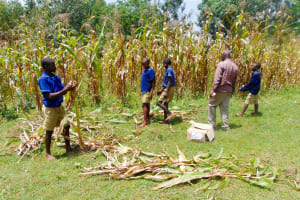 The Water Project: Shina Primary School -  Teachers And Pupils Getting Maize To Cook For Our Artisans