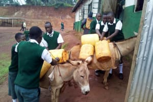 The Water Project: Kwirenyi Secondary School -  Donkeys Carrying The Water