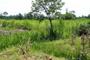 The Water Project: Luyeshe Community, Matolo Spring -  Sugarcane Farm
