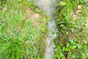 The Water Project: Mukoko Community, Mshimuli Spring -  Current Water Source