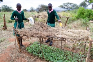 The Water Project: Waita Primary School -  The Tree Project