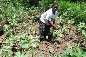 The Water Project: Mukoko Community, Mshimuli Spring -  Emily In Her Garden