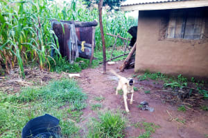 The Water Project: Bukhakunga Community, Khayati Spring -  Dog Running To Greet Us_