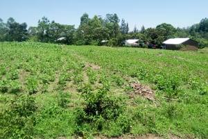 The Water Project: Mukoko Community, Mukoko Spring -  Farm