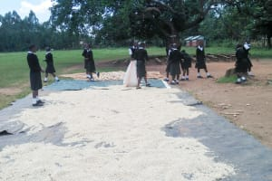 The Water Project: Lwanda Secondary School -  Helping Dry Maize