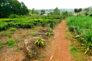 The Water Project: Ngeny Barak Community, Ngeny Barak Spring -  Tea Farm