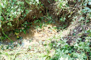 The Water Project: Lukova Community, Wasike Spring -  Current Water Source