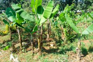 The Water Project: Shitsuvio Community, Shihevi Spring -  Banana Farm
