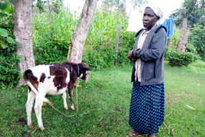 The Water Project: Bukhakunga Community, Khayati Spring -  Leonida Showing Us The Calf She Is Raising