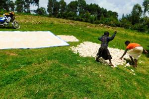 The Water Project: Ngeny Barak Community, Ngeny Barak Spring -  Drying Maize