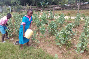 The Water Project: Maganyi Primary School -  Brevisious Lugadilo And Diana Mukhono Watering Vegetable Garden