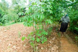 The Water Project: Wajumba Community, Wajumba Spring -  Cassava Farm