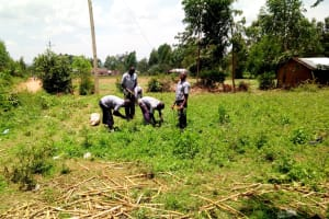 The Water Project: Matungu SDA Special School -  Students Harvesting Vegetables
