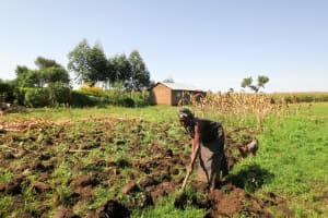 The Water Project: Bukhaywa Community, Asumani Spring -  A Woman Preparing For Planting