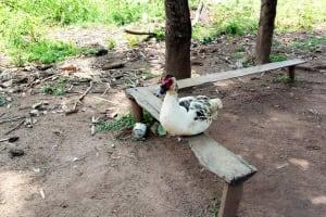 The Water Project: Musango Community, Mushikhulu Spring -  Sitting Duck