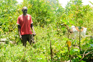 The Water Project: Munenga Community, Burudi Spring -  Man With His Cow