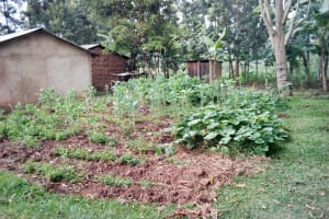 The Water Project: Emukoyani Community, Ombalasi Spring -  Household Farms