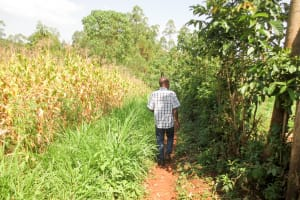 The Water Project: Bukhakunga Community, Ngovilo Spring -  A Man Walking Through His Maize Farm