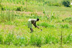 The Water Project: Munenga Community, Burudi Spring -  Working On The Farm