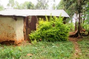 The Water Project: Bukhakunga Community, Ngovilo Spring -  Backyard