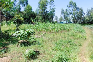 The Water Project: Ibinzo Community, Lucia Spring -  Community Landscape
